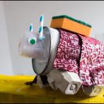 Wildschwein - Vorschule